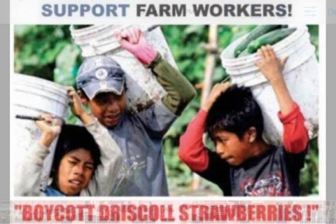 480_driscolls_boycott_child_labor_strawberries.jpg