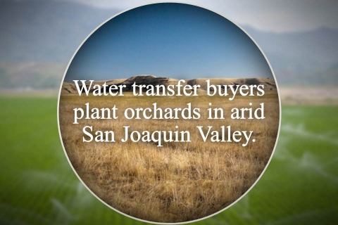 480_watertransferbuyersaridsjvgraphic_1.jpg