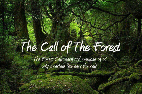 480_call_of_the_forest_1.jpg
