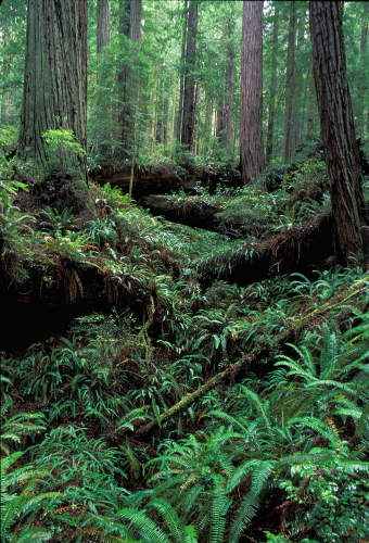 sm_headwaters_forest_reserve.jpg
