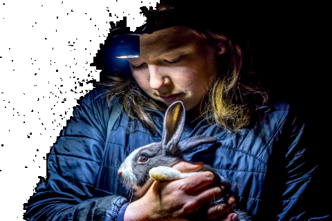 480_dxe_ab44-rabbit.jpg