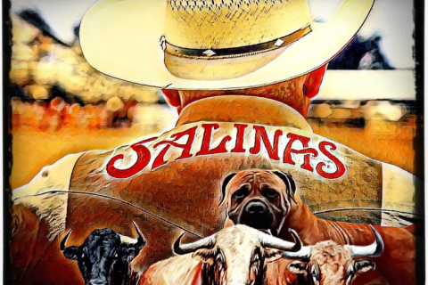 480_salinas_rodeo_dogs_baiting_bulls_2019.jpg