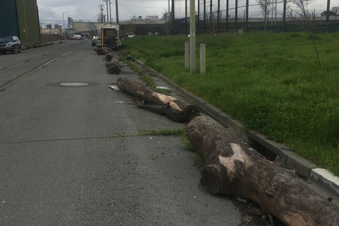 480_willow_and_20th_street_logs.jpg