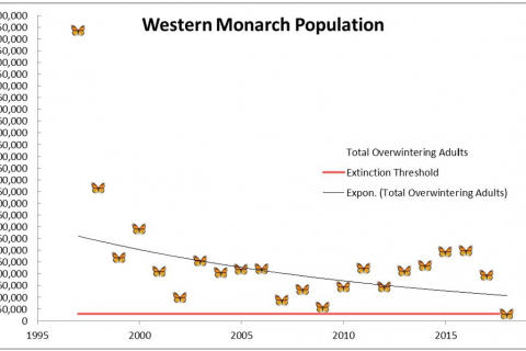 480_western-monarch-population-center-for-biological-diversity.jpg