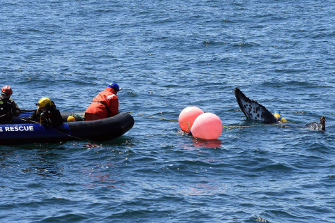 480_humpback_whale_entanglement_team_rescue_monterey_bay_may_18_2020_credit_noaa_fisheries.jpg