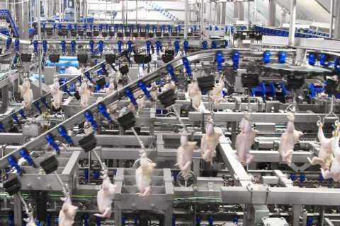 480_foster_farms_chicken_production_line.jpg