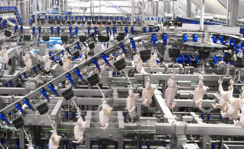 sm_foster_farms_chicken_production_line.jpg