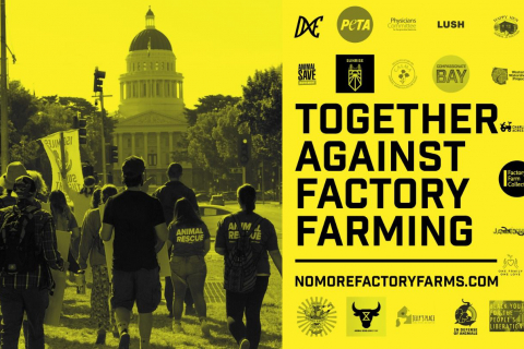 480_together_against_factory_farms_1.jpg