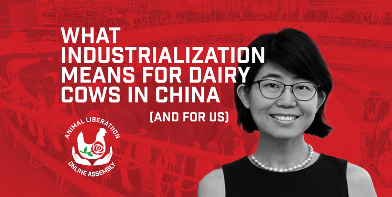 sm_online_assembly-_what_industrialization_means_for_dairy_cows_in_china__and_for_us__.jpg