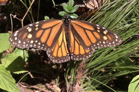 480_monarch-butterfly-lori-ann-burd-center-fpwc_1.jpg
