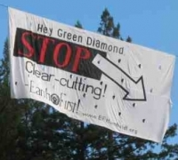 Tree Sitters Occupy Humboldt Redwoods