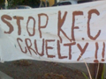 KFC Protest in Healdsburg