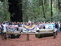 Groups Vow Legal Challenge Against Highway Widening Threatening Ancient Humboldt Redwoods