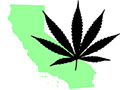 New Poll Shows California Marijuana Initiative With 52% Support