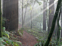 Cycling Advocates Seek Control of Santa Cruz County Sierra Club