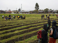 Occupy the Farm Activists Reclaim Prime Urban Agricultural Land in SF Bay Area