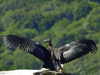 Lawsuit Targets San Benito County's Approval of 15 Oil Wells in Endangered Condor Habitat