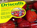 U.S. and Mexican Workers Call for Boycott of Driscoll's Berries