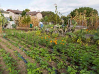 Call for Action to Prevent Beach Flats Community Garden Plots from Destruction