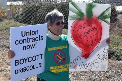 Solidarity with San Quintín Farmworkers at Driscoll's Distribution Center in Aromas, CA