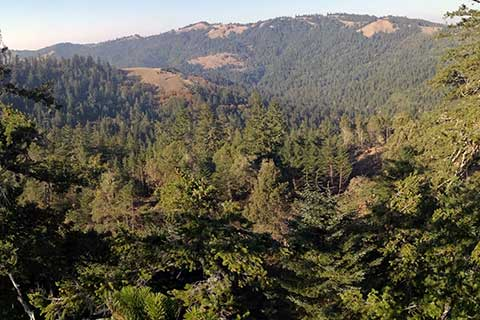 Tree Sitters Protest Sierra Pacific Industries Clearcut Logging