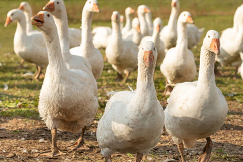 Restaurants and Retailers Warned Against Illegal Sales of Foie Gras